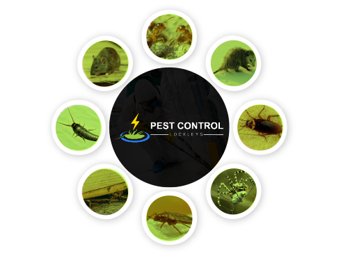 Pest Control Lockleys
